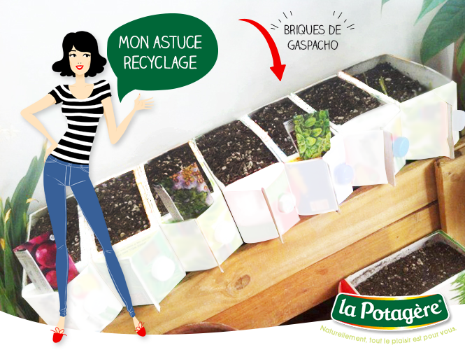 la-potagere-franckie-illustration